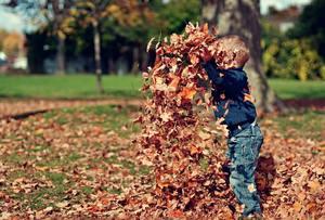 peuter speelt met herfstbladeren in het park